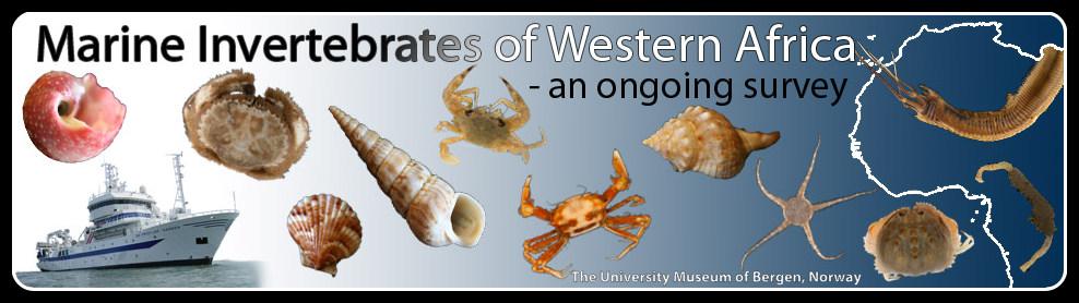 Marine Invertebrates of Western Africa