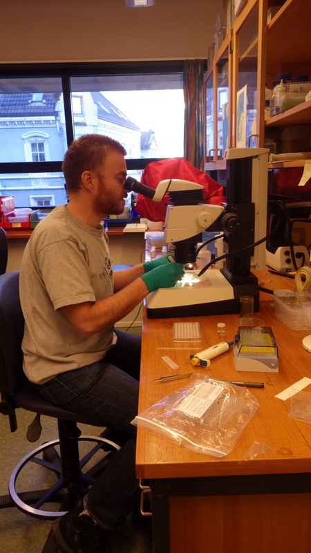 Tom taking tissue samples for two plates of Ampharetidae and other Terebellomorph polychaetes
